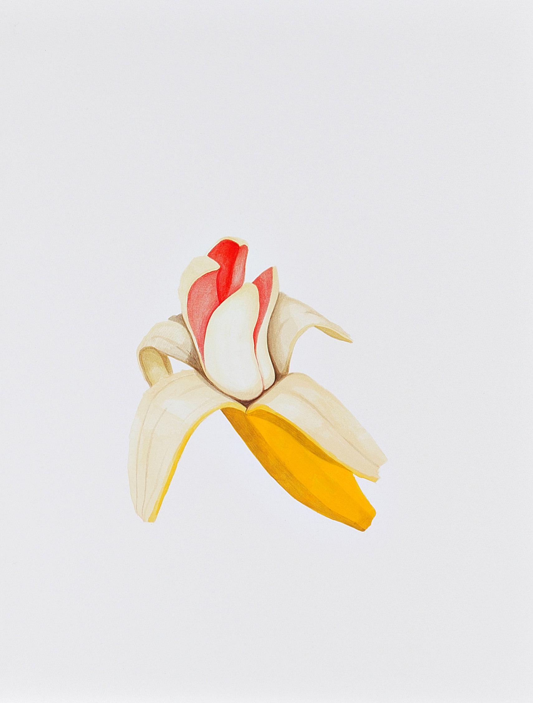 빨간 바나나 41cmx32cm acrylic on paper 2017